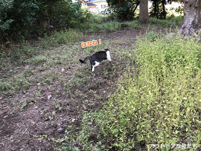 キャンプ場の野良猫