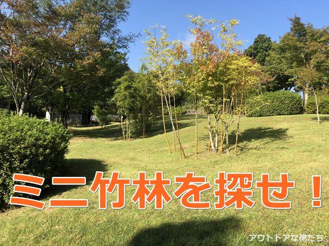 竹林と芝生