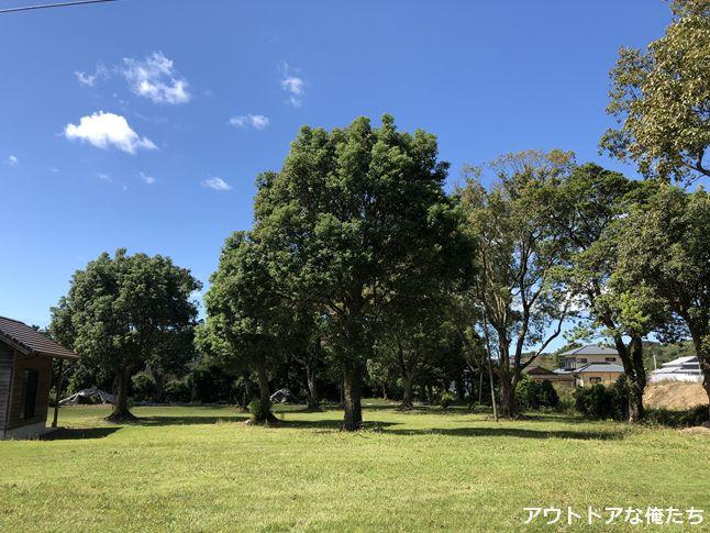 キャンプ場と木