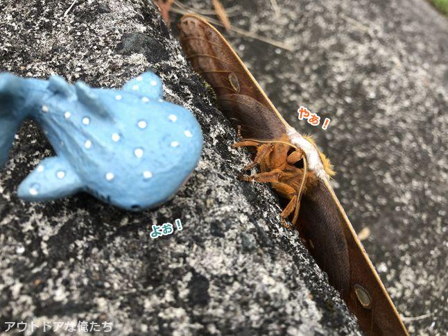 蛾とジンベイザメのフィギア