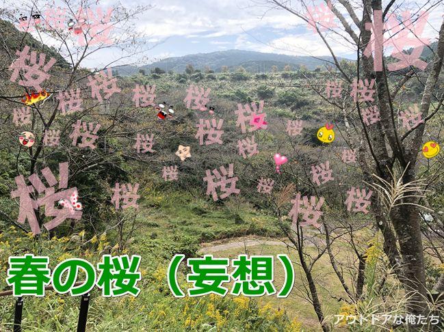 観音ヶ池の桜