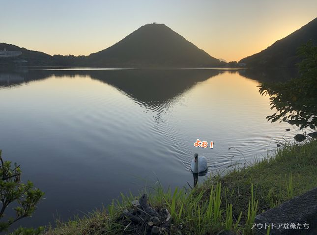 白鳥と藺牟田富士と朝日