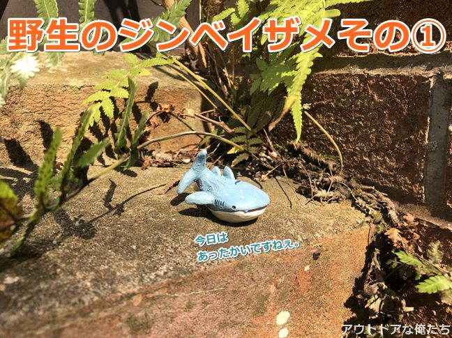 ジンベイザメのフィギア