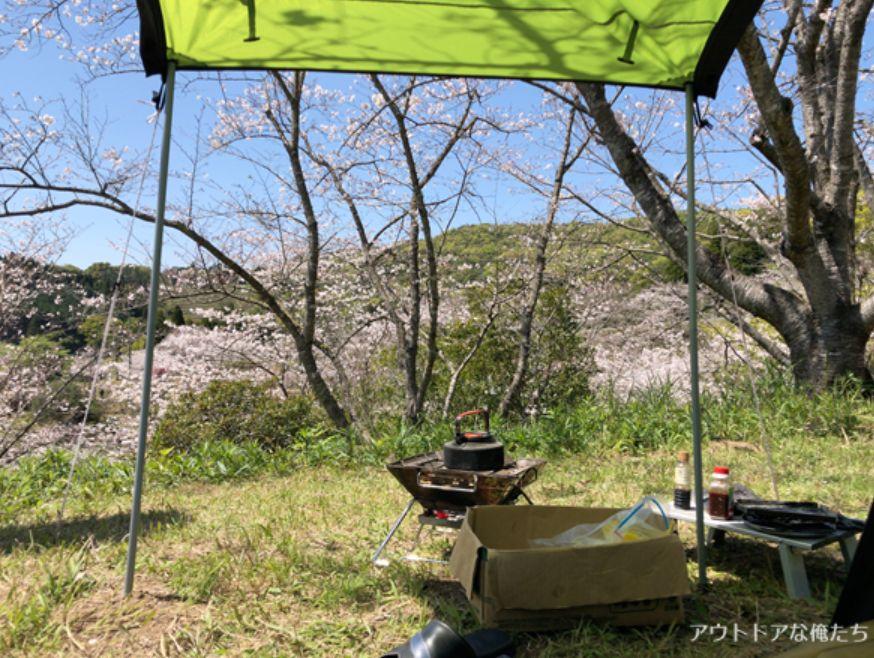 テントと桜