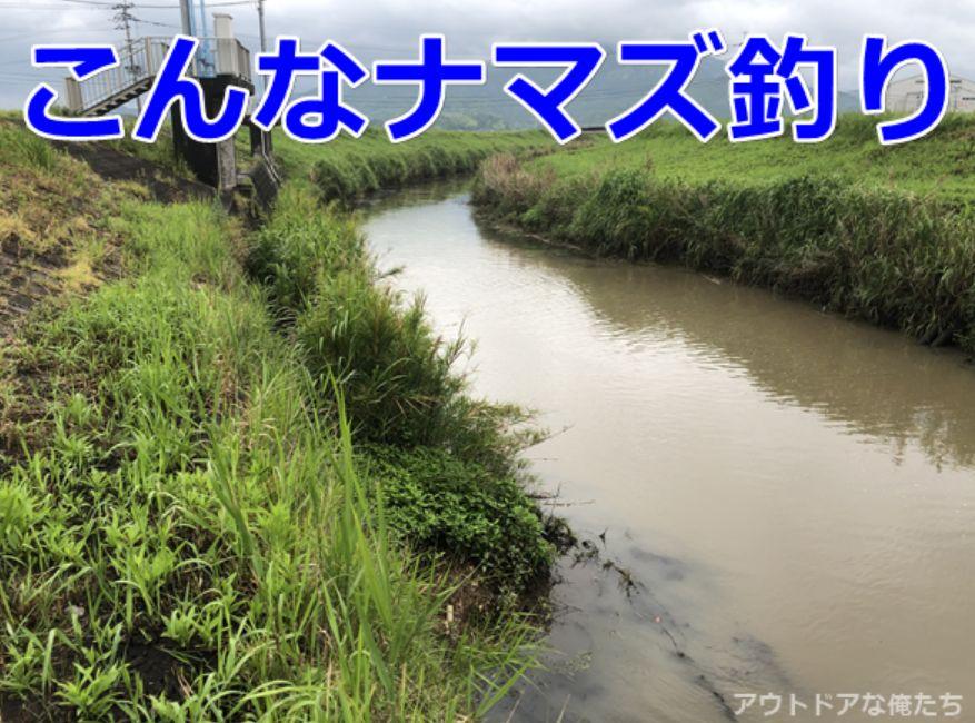ナマズが釣れるドブ川