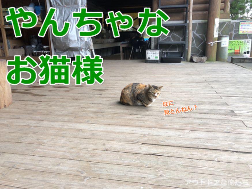 キャンプ場の猫