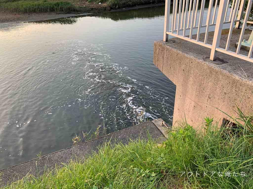 水門などの流れ込みはベイトフィッシュが流れてくる絶好のポイント