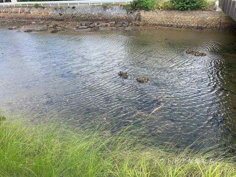 浅い小規模河川