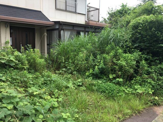 庭に草が生えた家